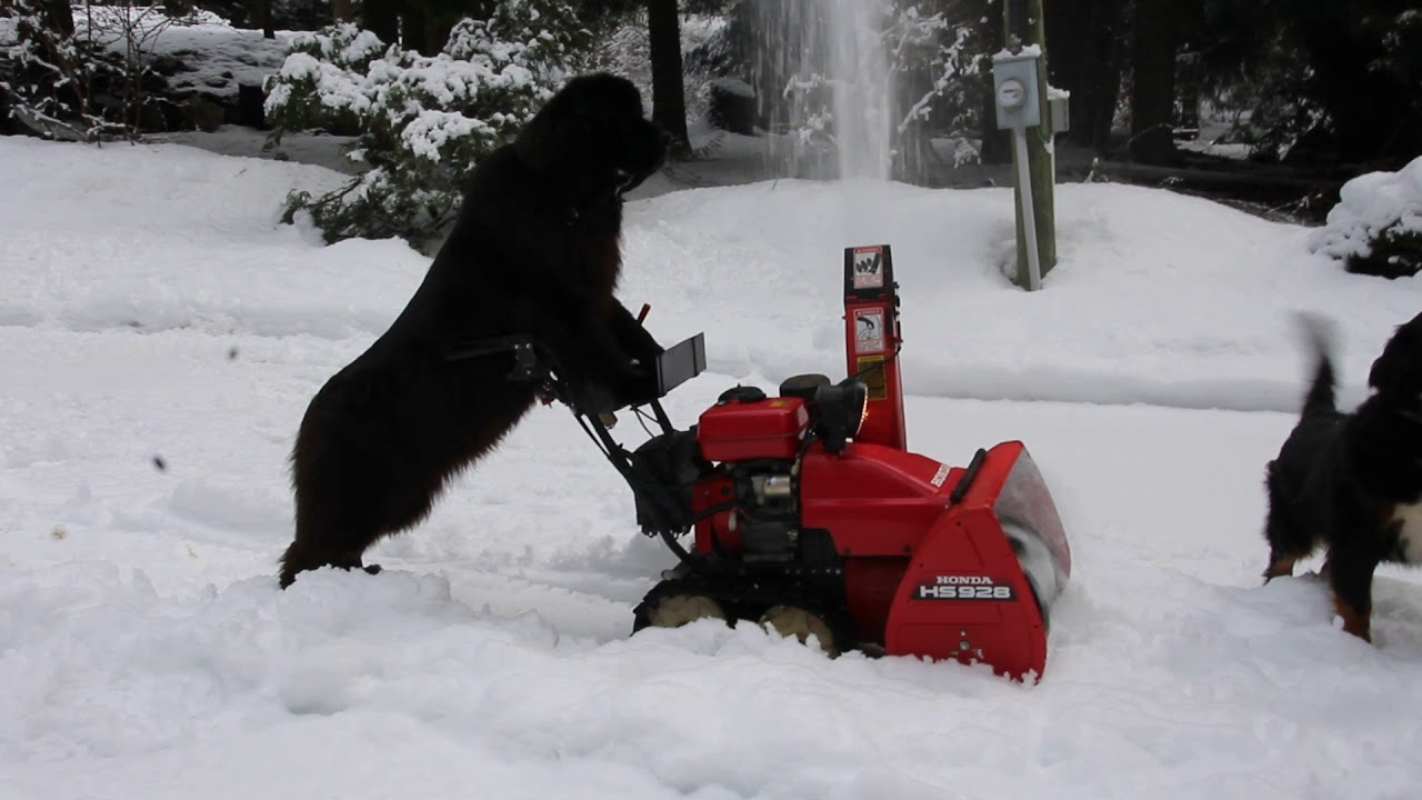 10 Awesome Inventions for Living with Snow