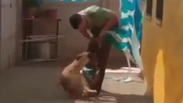 Amazing reaction of a dog when a police officer helped him