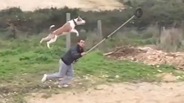 Do dogs have superpowers? I think, probably, yes…